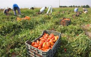 Braccianti e lavoro agricolo