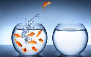 Pesce rosso che salta fuori dall'acquario.